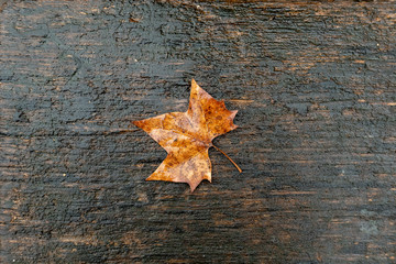 detail of wet leaf at a bench
