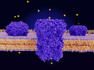 Chloride channels conducting chloride ions across a cell membrane