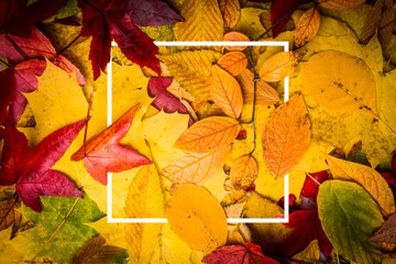 background of autumn leaves. Autumn background. composition with picture frame