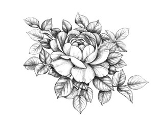 Hand drawn Rose Branch with Leaves