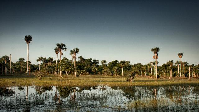 sunrise at zapata swamp, cuba
