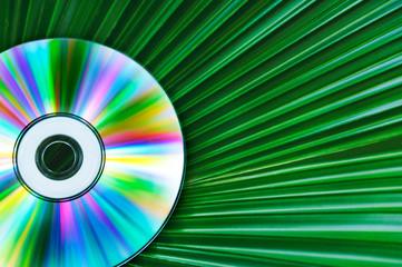 Palm Leaf and CD