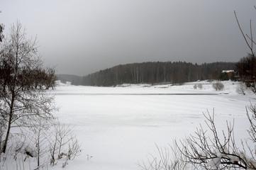 winter forest, fir tree, fir-tree branches