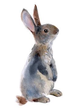 Gray rabbit standing