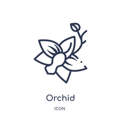 orchid icon from nature outline collection. Thin line orchid icon isolated on white background.