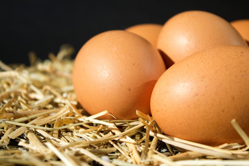 five fresh raw eggs with freckles on the hay on black background