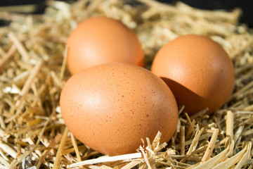 three fresh raw eggs with freckles on the hay on black background