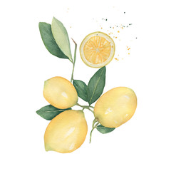 Lemons branch and half with splashes of watercolor isolated on white background. Hand drawn watercolor illustration.Fresh lemon with green leaves. Food element for your design.
