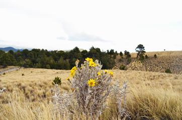 Flores amarillas en paisaje