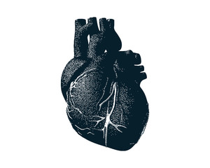 Monochrome human heart with dot drawing style