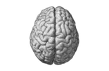 Stylized engraving drawing brain illustration