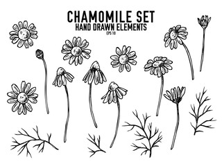 Vector collection of hand drawn black and white chamomile