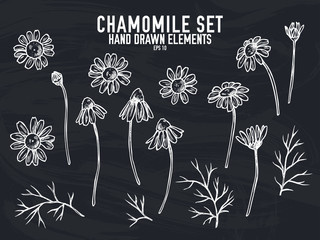Vector collection of hand drawn chalk chamomile