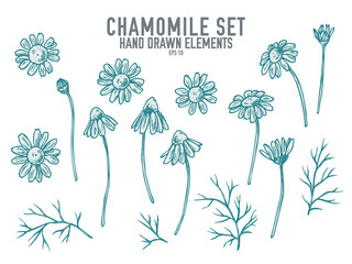 Vector collection of hand drawn pastel chamomile