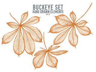 Vector collection of hand drawn pastel buckeye
