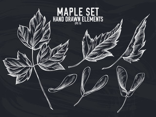 Vector collection of hand drawn chalk maple