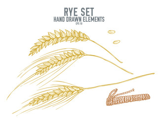 Vector collection of hand drawn pastel rye