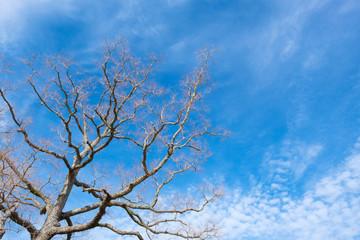 奈良公園 飛火野 木と青空