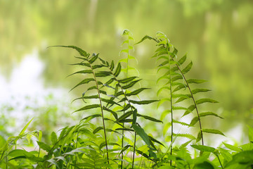 nature background with rain forest plant