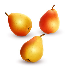 Set of fresh and yellow pears on a white background, ripe and realistic pears, vector illustration