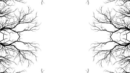 Bare tree branches on a pale white background Fototapete