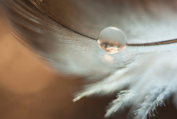 A small drop of water reflecting light and Shine on a gray-white feather on a brown background Wall mural