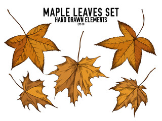Vector collection of hand drawn colored  maple leaves