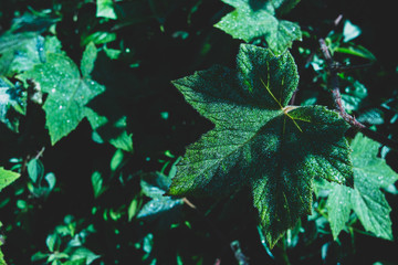 Nature background leaves
