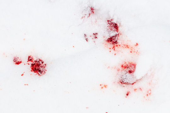 Red blood on white snow as a background