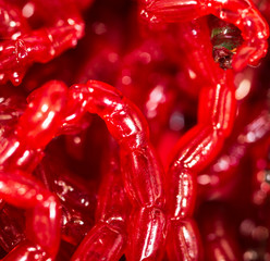 Red worms bloodworms as background