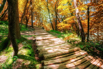 Beautiful wooden path trail for nature trekking through lush forest landscape in Plitvice Lakes National Park, UNESCO natural world heritage and famous travel destination of Croatia.