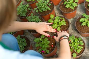 Female hands planting flowers