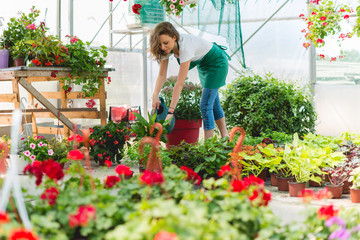 watering the flowers in greenhouse