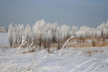 winter forest snow-covered trees in winter in snowdrifts  landscape scenery