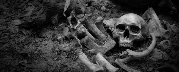 The skulls and pile bone in pit the graveyard; discover by dig in cemetery Wall mural