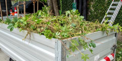 Grünschnitt Pflege einer Grünanlage