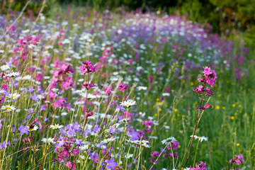 Blooming summer fields of flowers. Bright picture of herbs in summer