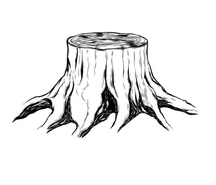 Dried Tree, Illegal Logging Symbol, Vector on White Background - Vector Illustration - Vector