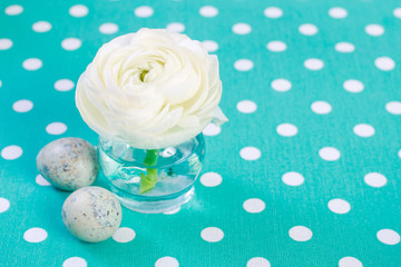 White ranunculus (persian buttercup) flowers on turquoise background