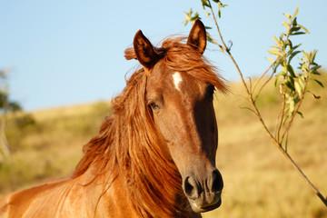 cavalo olhando