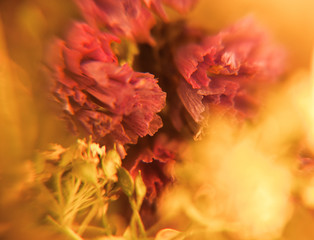 Blur background with flower and brunch in macro. Floral abstract photography. Soft romantic pattern in yellow color.
