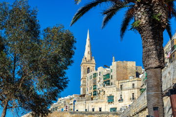 Fototapete - Palm Tree and Cathedral in Valletta, Malta