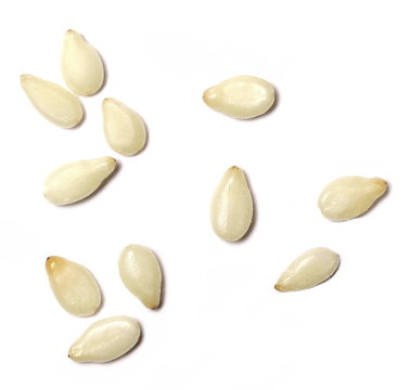macro sesame seeds isolated on white background, top view