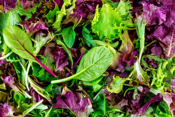 Salad mix leaves background. Fresh Salad Pattern with rucola, purple  lettuce, spinach, frisee and  chard leaf.