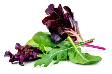 Salad leaves mix with rucola, purple  lettuce, spinach and  chard, leaf isolated on white background.