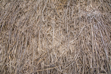 Straw feed for animals background and texture.