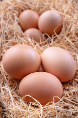 Tasty eggs in a straw bedding. Fresh ingredients for homemade pastries.