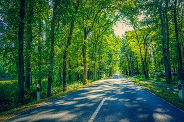 Road through a forest in summer