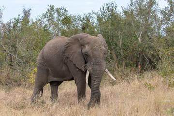 Garden Poster Elephant Elefant 57