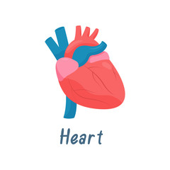 Heart, Human Anatomy Healthy Internal Organ Vector Illustration